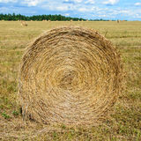 Round MOP of straw. On the field after the harvest Royalty Free Stock Photo