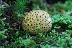 Round Mushroom Stock Photos