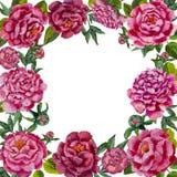 Round obrazu kwiatu ramy odosobniony tło wianek kwiatu wianek Zdjęcia Royalty Free