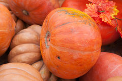 Round orange pumpkin Royalty Free Stock Photo