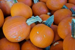 Round orange pumpkins in bulk at the farmers market. In the fall stock images