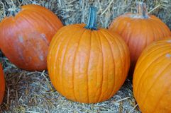 Round orange pumpkins Stock Photo