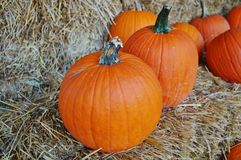Round orange pumpkins Stock Photography