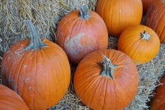 Round orange pumpkins Stock Photos