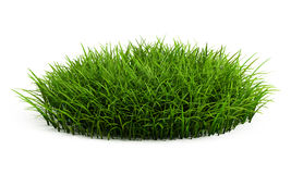 Round patch of fresh grass Stock Image