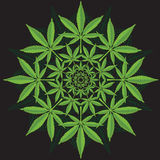 Round pattern from cannabis leaf. On black vector illustration