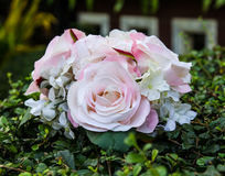 Round pink roses Stock Photos
