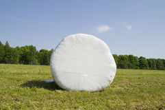 Round plastic packaging mown hay. The field is mown hay bale circular shape stock illustration