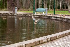 Round Pond With Ducks In Finland At Autumn Royalty Free Stock Photography