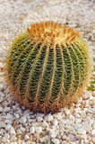 Round prickly cactus Stock Photo