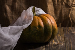 Round pumpkin with gauze Stock Images