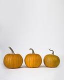 Round pumpkin Royalty Free Stock Photo
