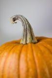Round pumpkin Royalty Free Stock Photos