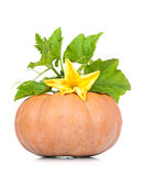 Round pumpkin Royalty Free Stock Photos
