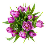 Round purple tulips bouquet Stock Photos