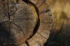 Round rżnięty drzewo Zdjęcie Stock
