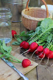 Round radishes on a wooden platform. Royalty Free Stock Photography