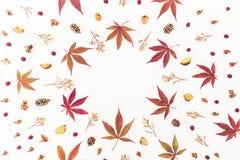 Round rama robić jesień liście, wysuszeni kwiaty i sosna rożki, na białym tle Mieszkanie nieatutowy, odgórny widok, kopii przestr Fotografia Stock