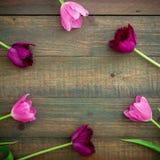 Round rama tulipanów kwiaty odizolowywający na drewnianym tle Mieszkanie nieatutowy, odgórny widok Zdjęcia Royalty Free