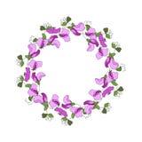 Round rama z kwiecistymi elementami słodkiego grochu liście i kwiaty ilustracji