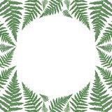 Round rama z zielonymi paprociowymi liśćmi ilustracja wektor