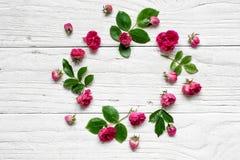 Round ramowy kwiatu wzór z różami kwitnie, pączkuje, rozgałęzia się i opuszcza, Obrazy Stock