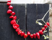 Round red hot chili peppers tied together in a semicircle and hanging from a wooden black wall stock photography
