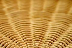 Round Reed Basket Pattern. Handwoven round reed basket pattern Royalty Free Stock Photography