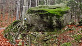 Round rock in the forest. Round rock covered with moss in the forest Stock Image