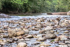 Round rock in watershed Stock Image