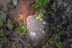 Round rock in watershed Royalty Free Stock Photo