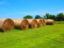 Round rolled hay bale Royalty Free Stock Image