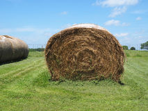 Round rolled hay bale Stock Image