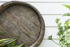 Round rough wood with green plant Stock Image