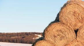 Round Słomiane Pastewne pościeli bele w zimie zdjęcie stock
