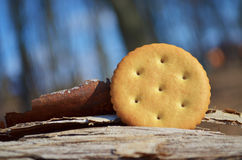 Round salty cracker on nature Royalty Free Stock Photos