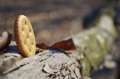 Round salty cracker on nature Royalty Free Stock Image