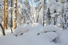 The round sculpture snow in the forest Royalty Free Stock Photos