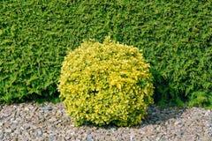 Round Shape Bush Royalty Free Stock Images