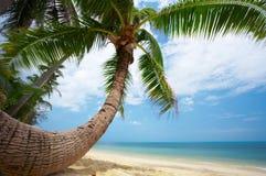 Round shape palm Royalty Free Stock Image