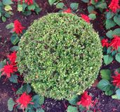 Round shaped bush Stock Photo