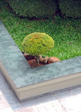 Round shaped bush Royalty Free Stock Photo