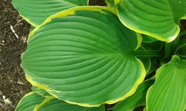 Round shaped leaf. Round shaped leaf with yellow outline royalty free stock photos