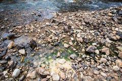 Round skała w rzece Zdjęcie Royalty Free