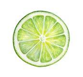 Round slice of green fresh lime. royalty free illustration