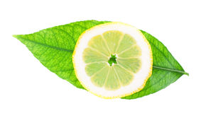 Round slice of a lemon on green leaf Stock Image