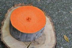 A round slice of winter squash Stock Image