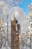 The round snow on the dead wood Royalty Free Stock Photography