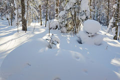 The round snow in the forest Royalty Free Stock Image