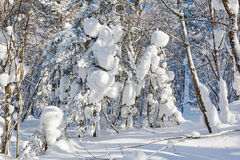 The round snow on the trees Stock Images